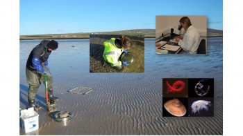 Sandy shore monitoring © Orkney Islands Council