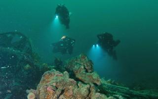 Snorkel Safari and Meet the Marine Creatures image